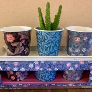 Wild & Wolf Plant/Herb Pots set of 3 on tray