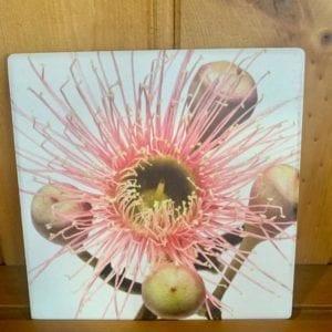 Splosh Flourish Pink Floral Ceramic Coaster
